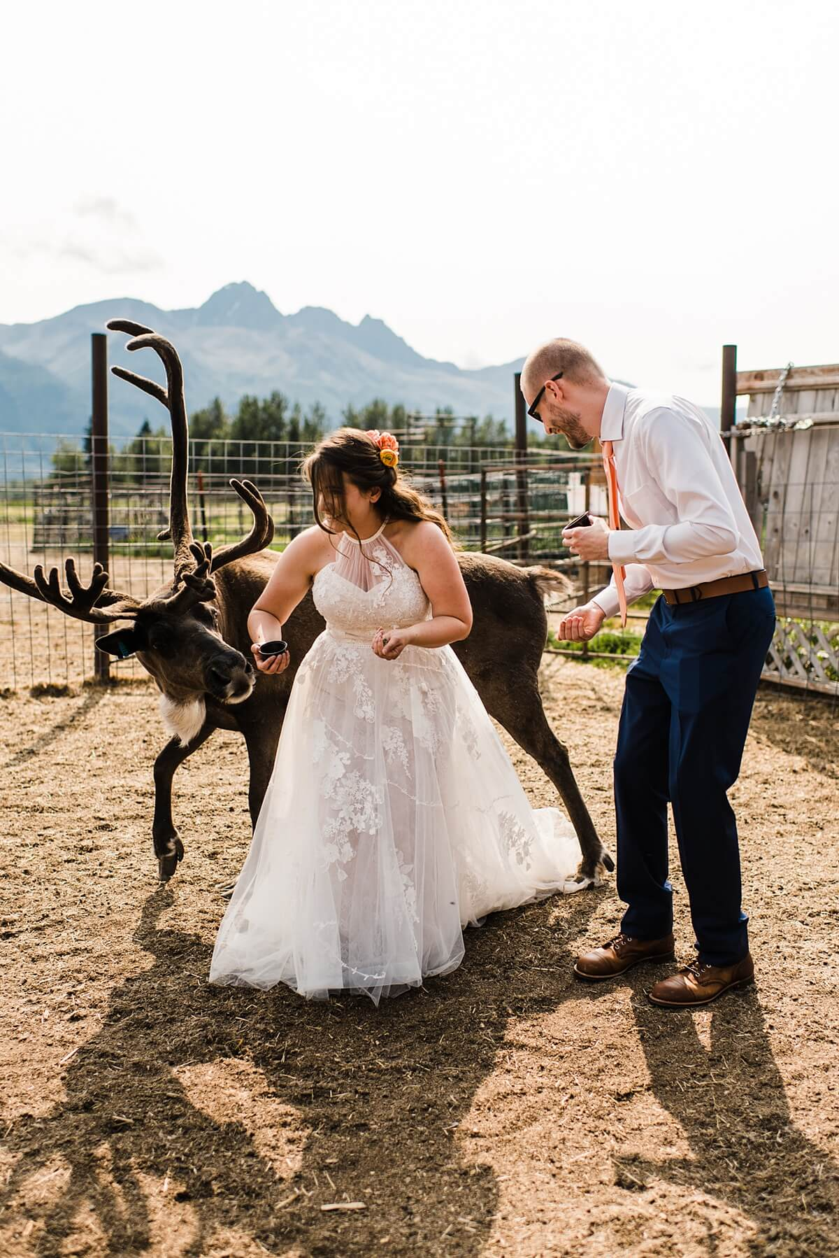 Alaska,adventure elopement,alaska adventure elopement photographer,anchorage,elope your life,hatcher pass,reindeer farm,sam starns,