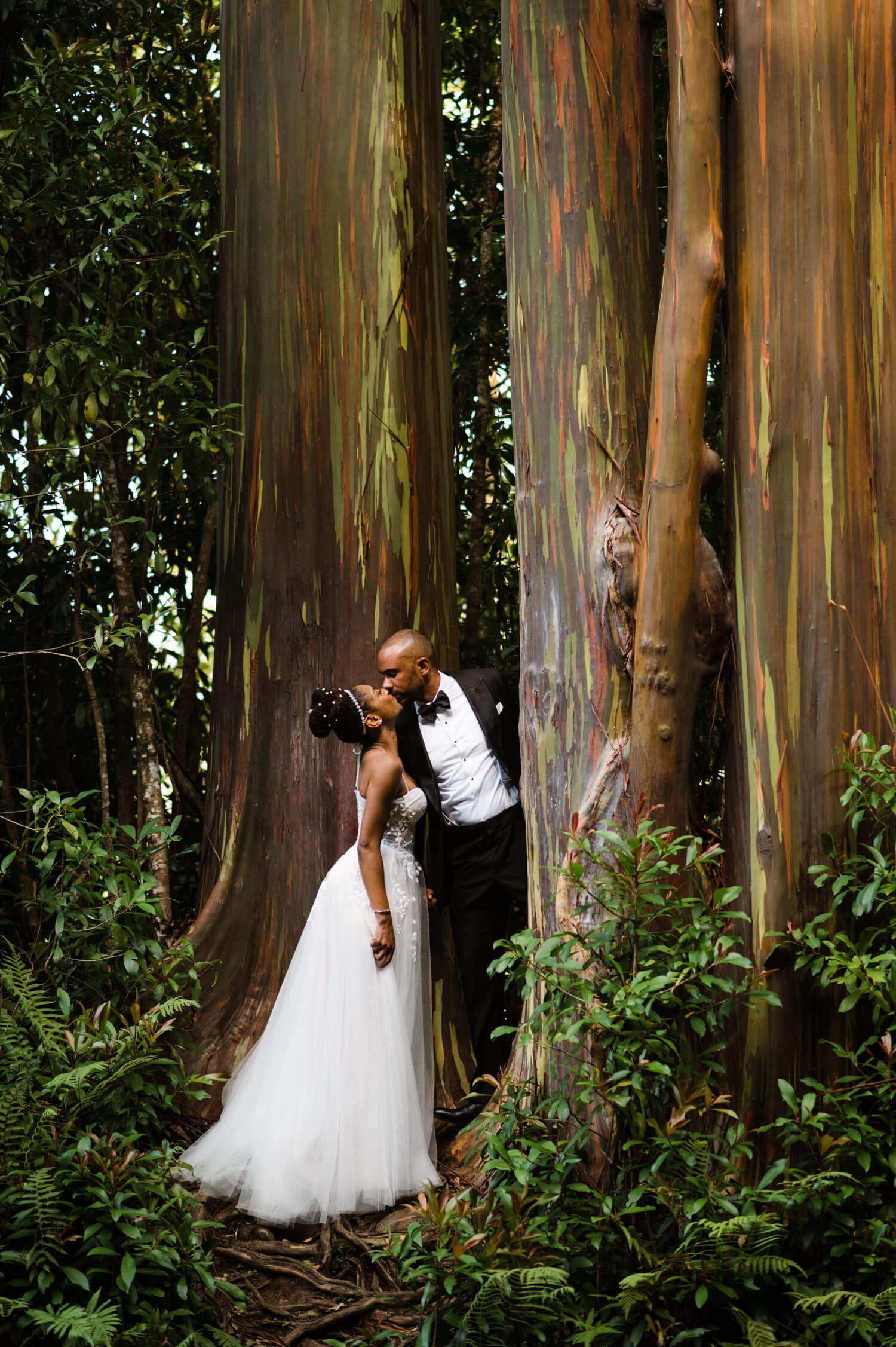 Road to Hana Maui elopement at rainbow eucalyptus trees
